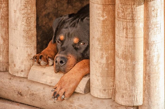 Domcek pre psa v ktorom mu bude príjemne